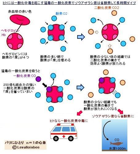 ボーア効果と一酸化炭素中毒REV