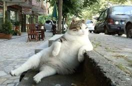 chill_cat.jpg