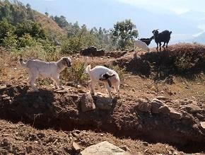 nepal4-7.jpg