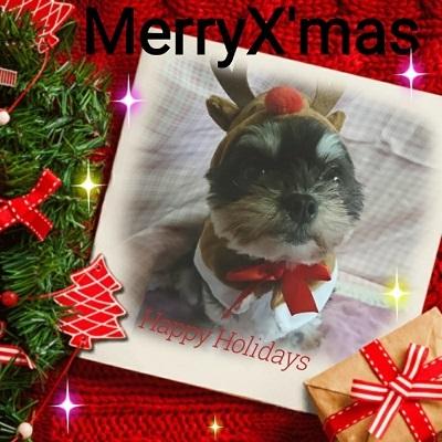 クリスマスS (1)