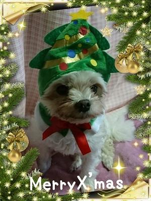 クリスマスY (2)