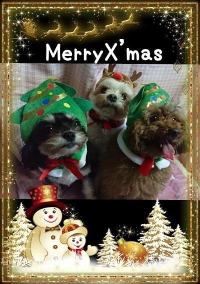 クリスマスYSY
