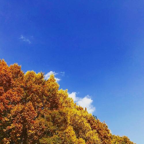 お散歩道の紅葉