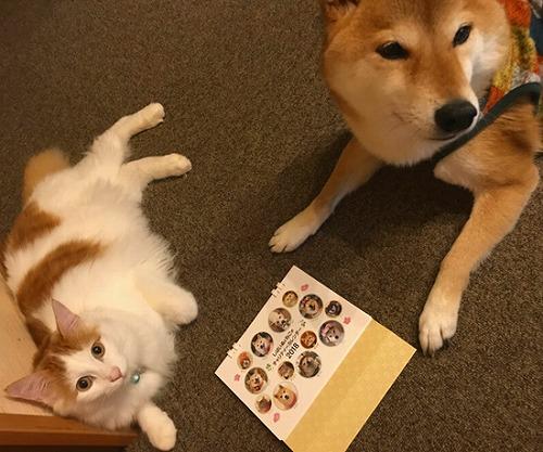 柴犬いなりちゃん&猫のてんくん(大分県)