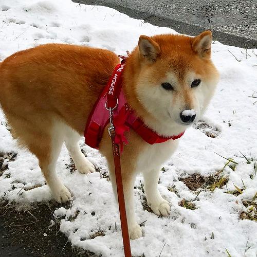 雪の鼻乗せ