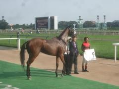 20111008 アレグレット姉ちゃんの命日にメジロオードリーの勝利^^/