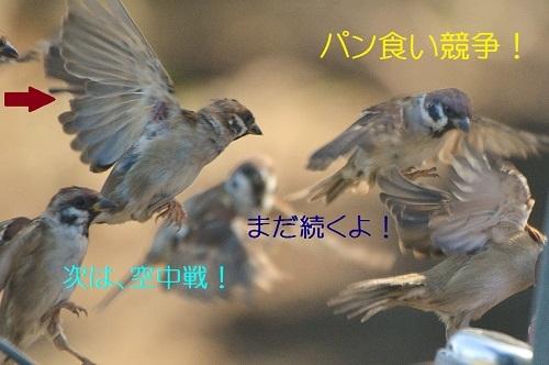 010_201710092110303fe.jpg