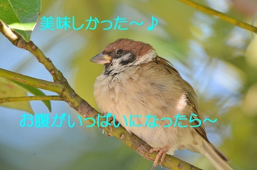 010_20171010193901de7.jpg