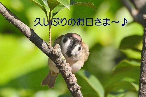 010_201710181835191ac.jpg