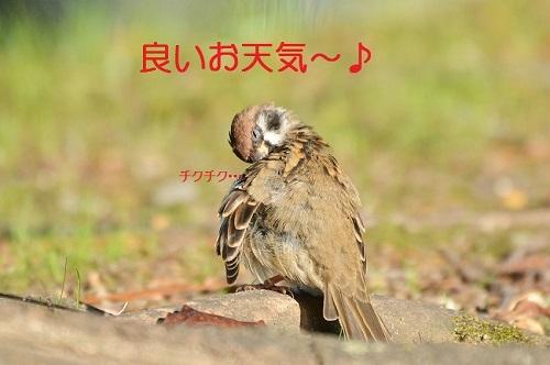 010_20171103211352abf.jpg