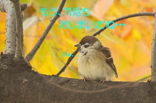 010_2017113017482151f.jpg