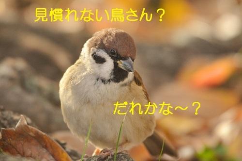010_2017122018103523f.jpg