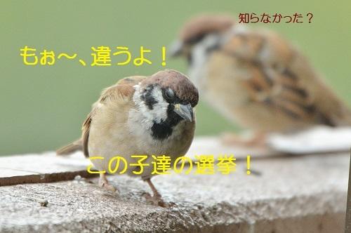 030_201710051938303de.jpg