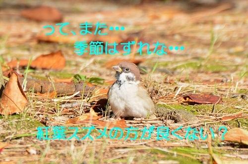 030_201710151931014ed.jpg