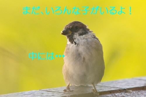 030_201710171852329c3.jpg