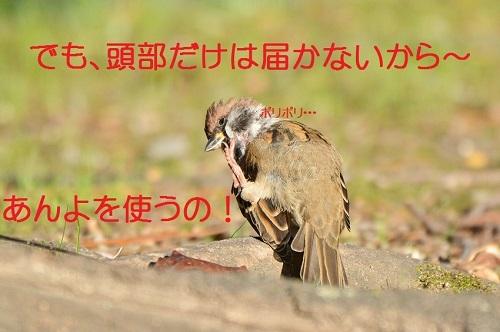 030_20171103211355051.jpg