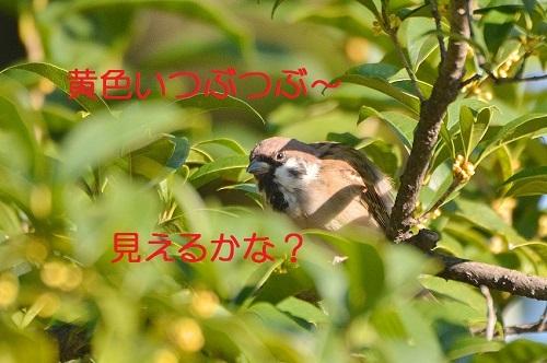 040_201710181835243ab.jpg