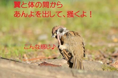 040_20171103211357c98.jpg