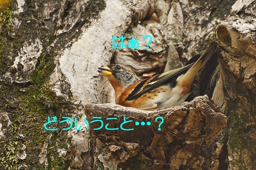 040_20171202200914f7f.jpg