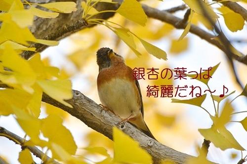 040_20171204194420f9d.jpg
