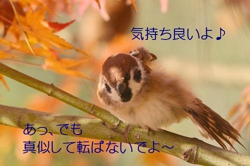 040_2017123019270062b.jpg