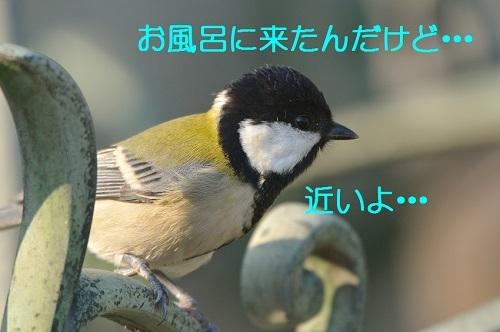 050_20171112205437d8e.jpg