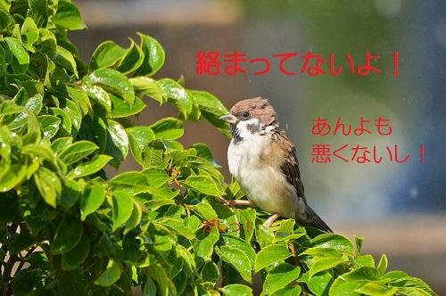 060_20171007211037efa.jpg