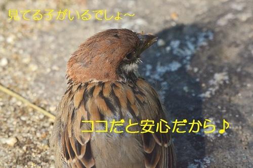 060_20171010193932d71.jpg
