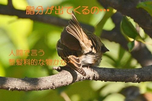 060_201710191929255ae.jpg