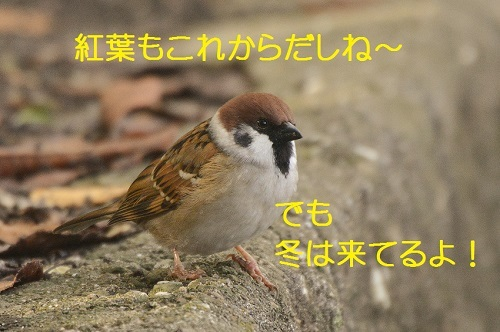 060_20171107194219a57.jpg
