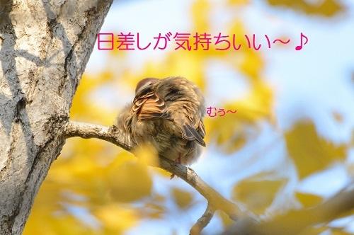 060_201712041945072e1.jpg