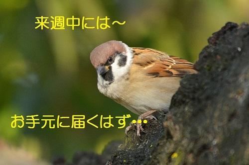 070_201711301748593c5.jpg