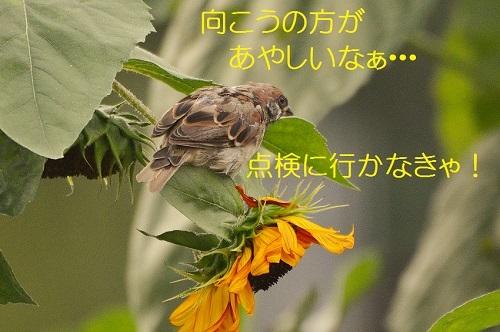 080_20170922183509d12.jpg