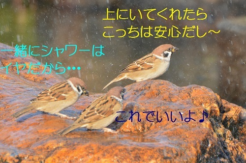 080_2017111517403646c.jpg