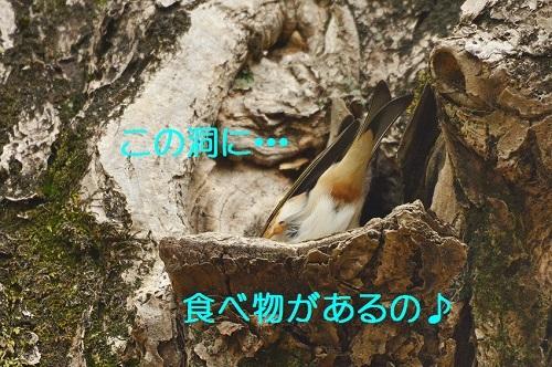 080_20171202201029e14.jpg