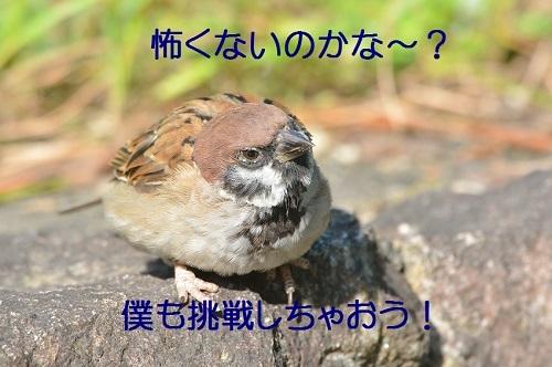 090_20171010193936fcb.jpg