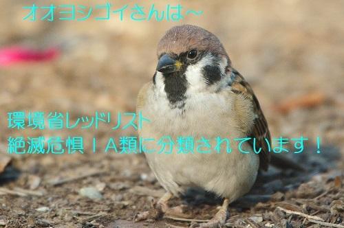 090_20171011194047ee7.jpg