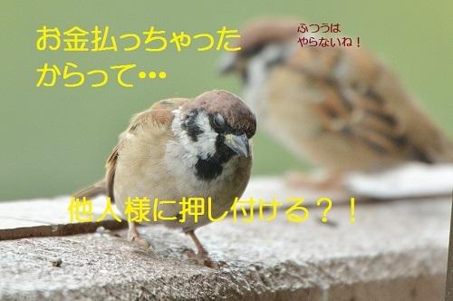 090_201710131915170d9.jpg