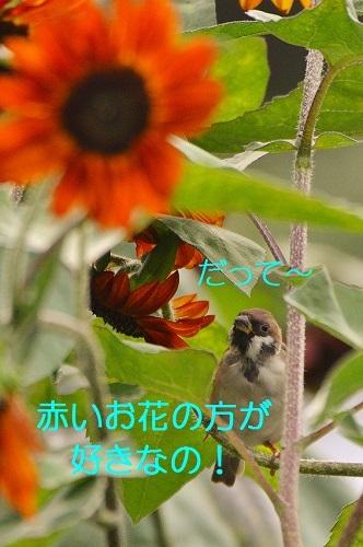 100_20170922183512f32.jpg