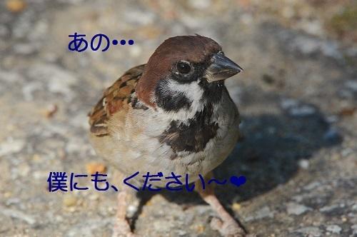 100_201710101939389a6.jpg
