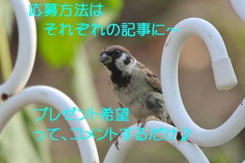 110_20171014174807d2d.jpg