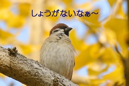 110_20171202201217550.jpg