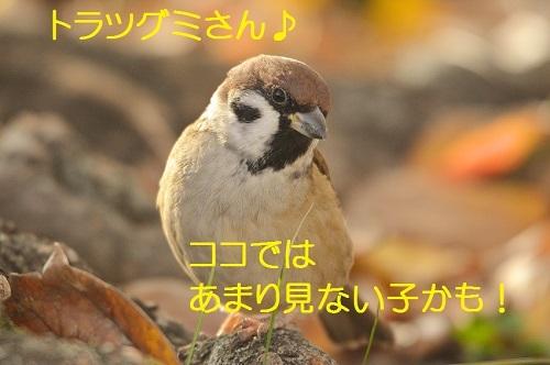 110_20171220181152798.jpg