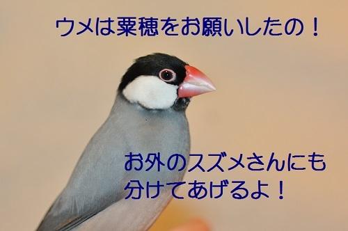 110_20171224185053ed2.jpg