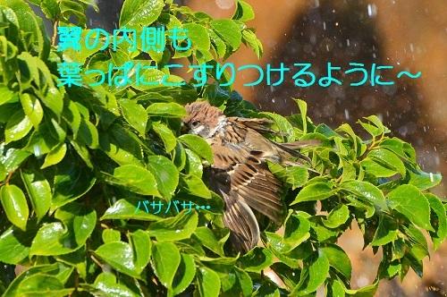 120_20171007211114c4a.jpg