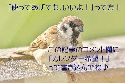 120_20171013191636d4f.jpg
