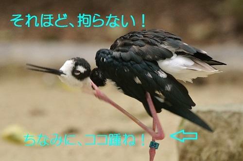 120_20171103211705dcd.jpg
