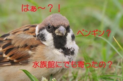 130_20170927200519be8.jpg