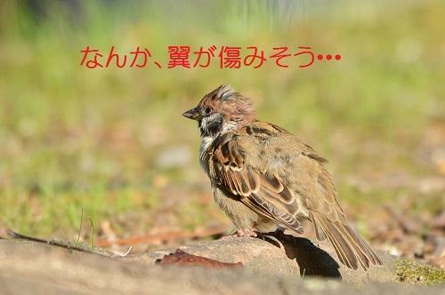 130_201711032117064b7.jpg