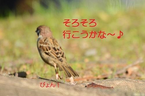 140_20171103211708438.jpg